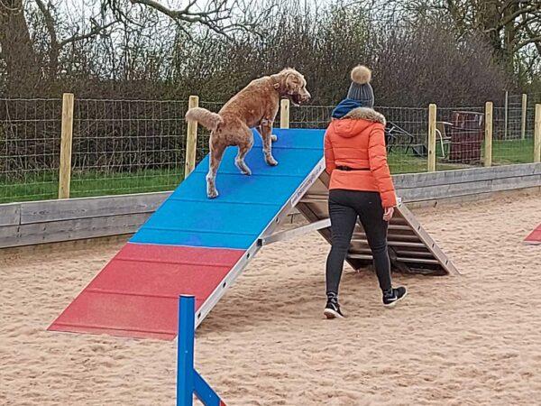 Dog Training & Agility Arena